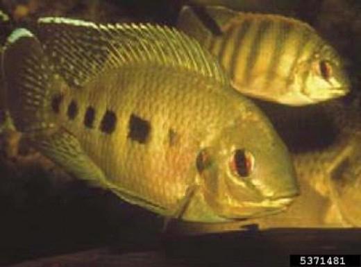 Texas Invasive Species Institute