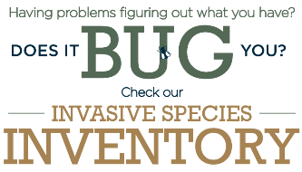 Does it Bug You - Check out Invasives Species Inventory